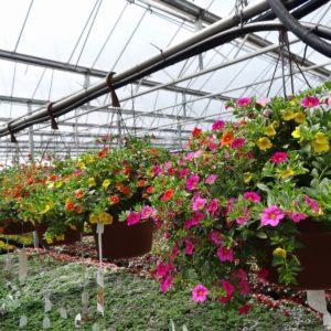 4 Seasons Vegie Farm